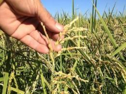 農事組合法人 農民連・奈良産直センター