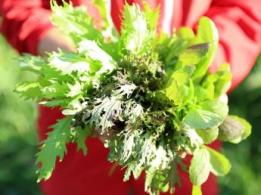 ライク・ズワーン・ブリーディング・ジャパン株式会社