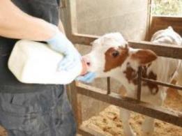 <span>井出亨農園</span>長野県 高原野菜