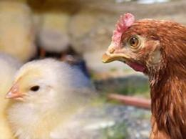 <span>株式会社SEA-LAKE</span>北海道 酪農業
