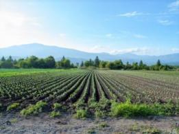 <span>有限会社佐野ファーム</span>静岡県 野菜・果樹の生産、販売