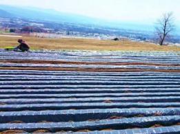 <span>障害者支援施設あかつき園</span>埼玉県 野菜・米の栽培と収穫、知的障害者の介助