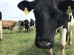 <span>有限会社簗瀬牧場</span>鹿児島県 黒毛和牛