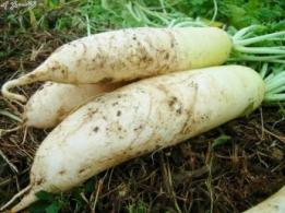 <span>山田敏明牧場</span>北海道 酪農、畑作