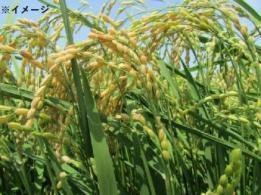 <span>農事組合法人 ホリ牧場</span>石川県 酪農
