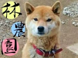<span>神戸市西区の牧場</span>兵庫県 酪農