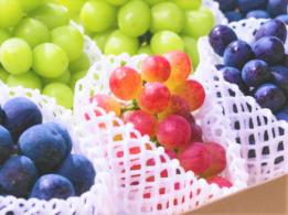 <span>有限会社ミズタ</span>北海道 ぶどう、ミニトマト生産