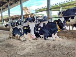 <span>増田農業株式会社(MASUDA AGRI Co., Ltd.)</span>奈良県 水稲、野菜
