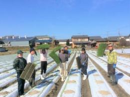 <span>安西花卉園【台風15号被災支援求人】</span>千葉県 被災農家の復旧お手伝い