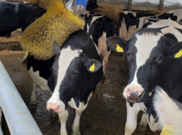 <span>やまぐち農業体験ツアー説明会in東京</span>