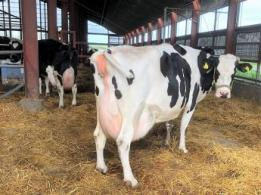 <span>フロンティア牧場株式会社</span>北海道 酪農業