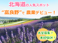 """New!!大自然の恵みを浴びて美味しい野菜と思い出作り!""""ふらの""""で農作業ヘルパーを募集!"""